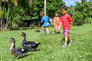 Triplets chase ducks in Fiji